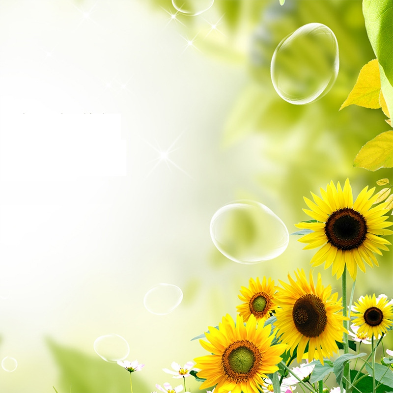 唯美花朵背景 小清新背景 花朵背景 向日葵花 春季背景 psd 白色