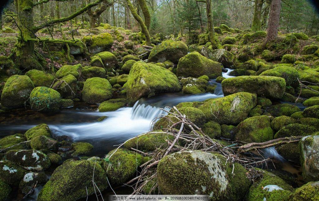 森林 小溪 树木 石头 青苔 摄影
