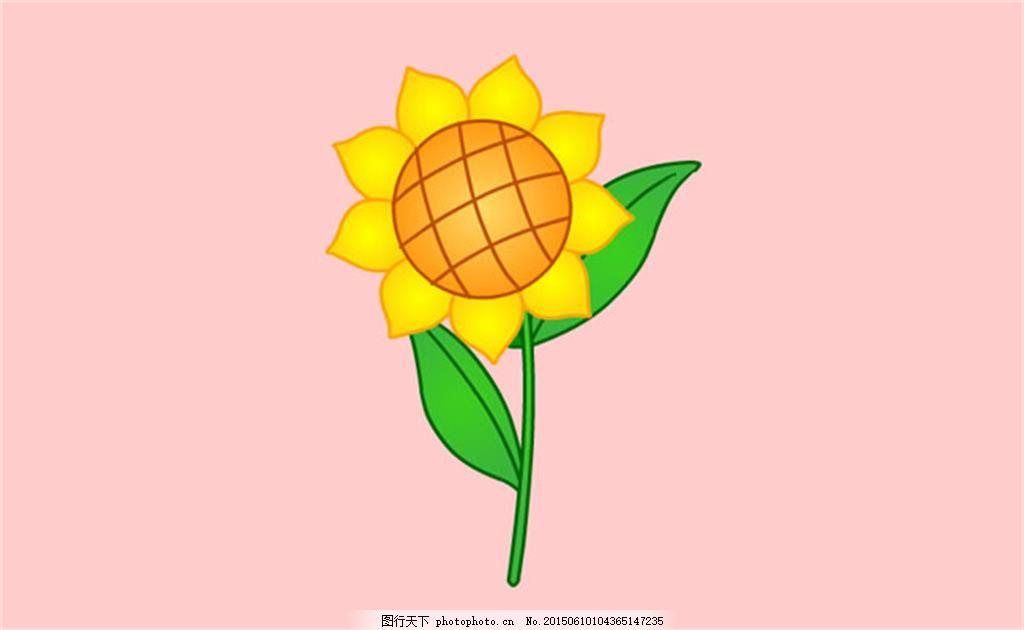向日葵幼茎横切结构图手绘图