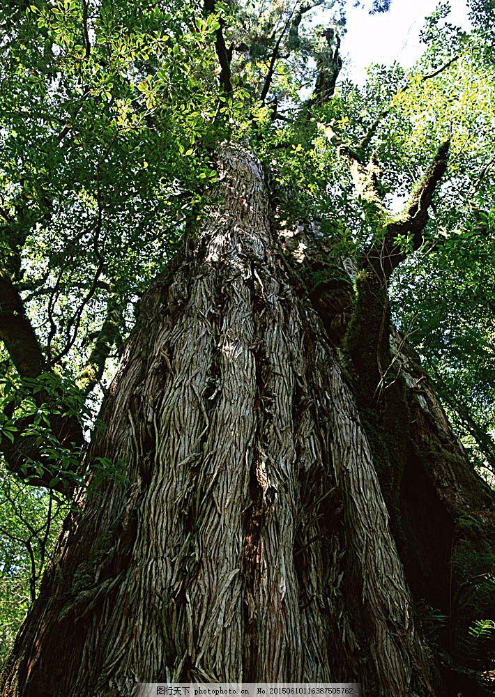 大树树根 自然 风景 树林 森林 阳光 花草树木 生物世界 图片素材