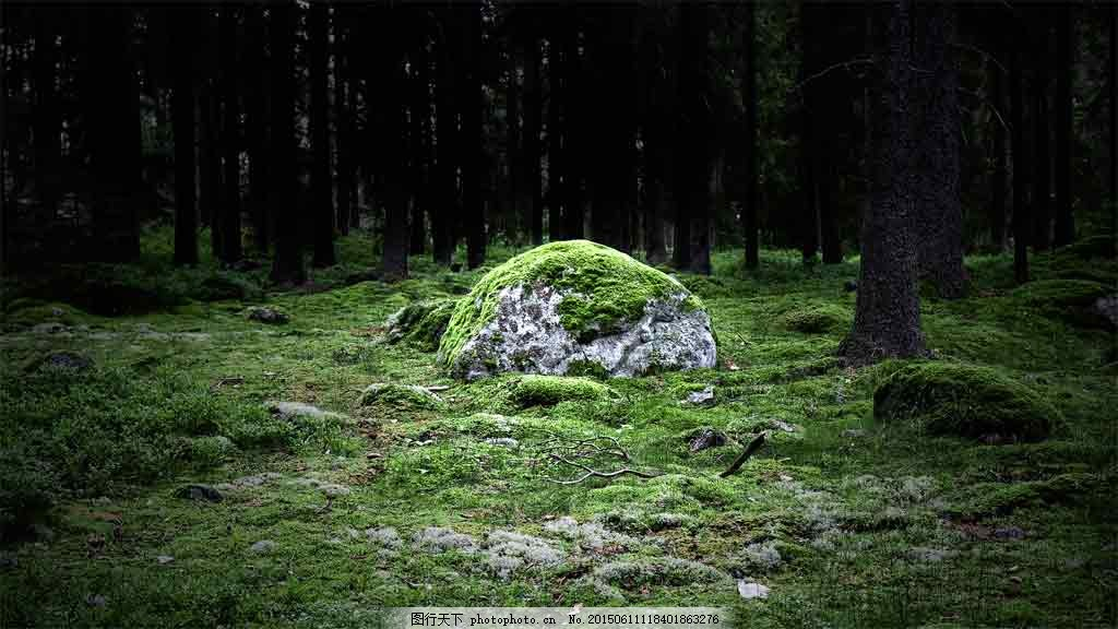 绿色森林苔藓草地背景 绿森林 梦幻森林 童话森林背景 发光森林