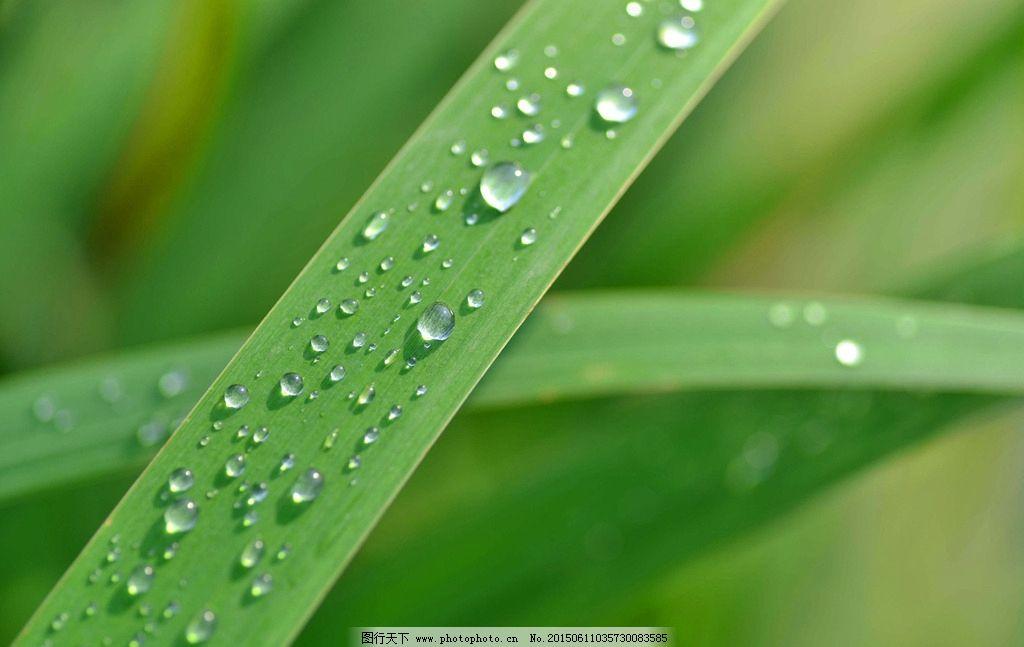 雨后叶子图片