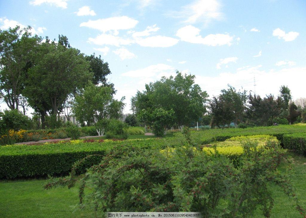 绿化景观 灌木丛 绿地 草地 花草 枝叶 绿树 树木 园林景观 白云蓝天