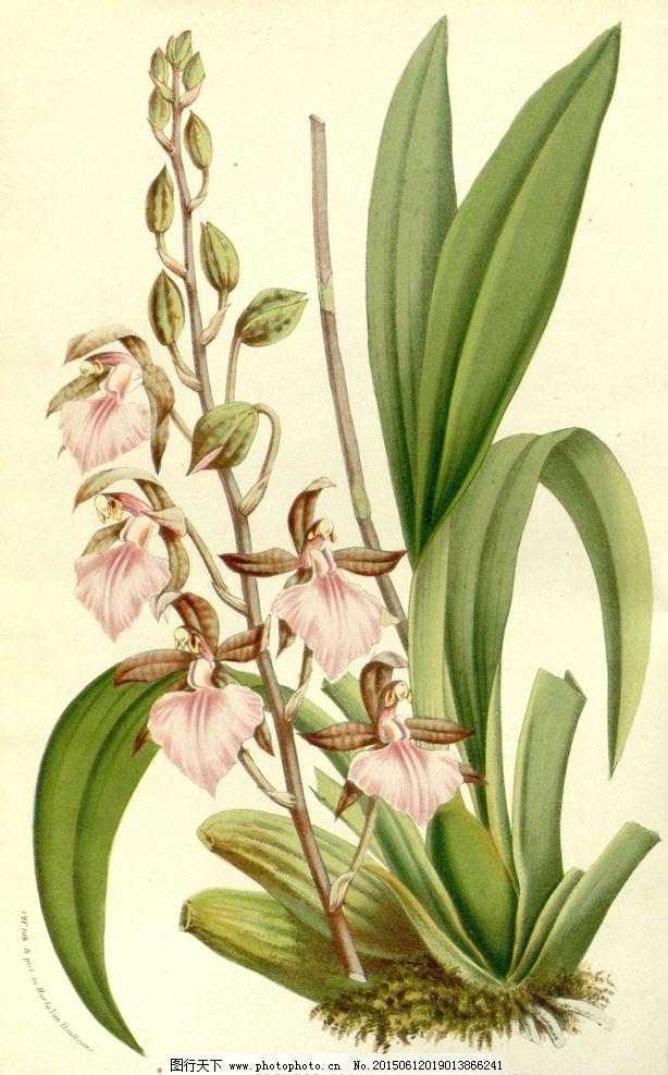 欧美 装饰画 植物
