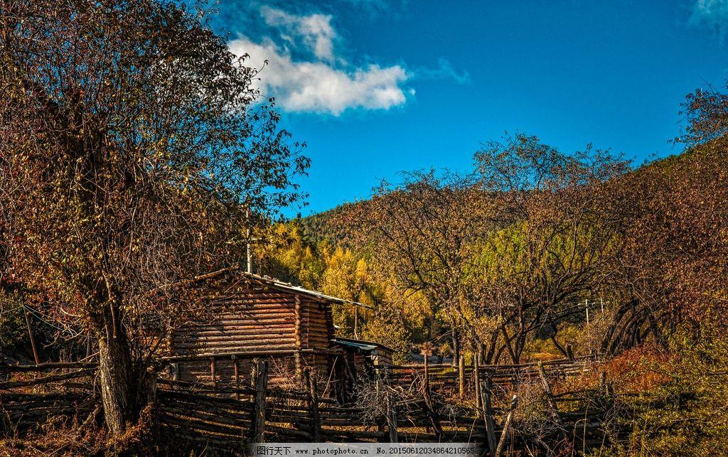 香格里拉 风景 天空 木屋 原始森林 秋天 枫林 红枫 树林 高原 蓝天