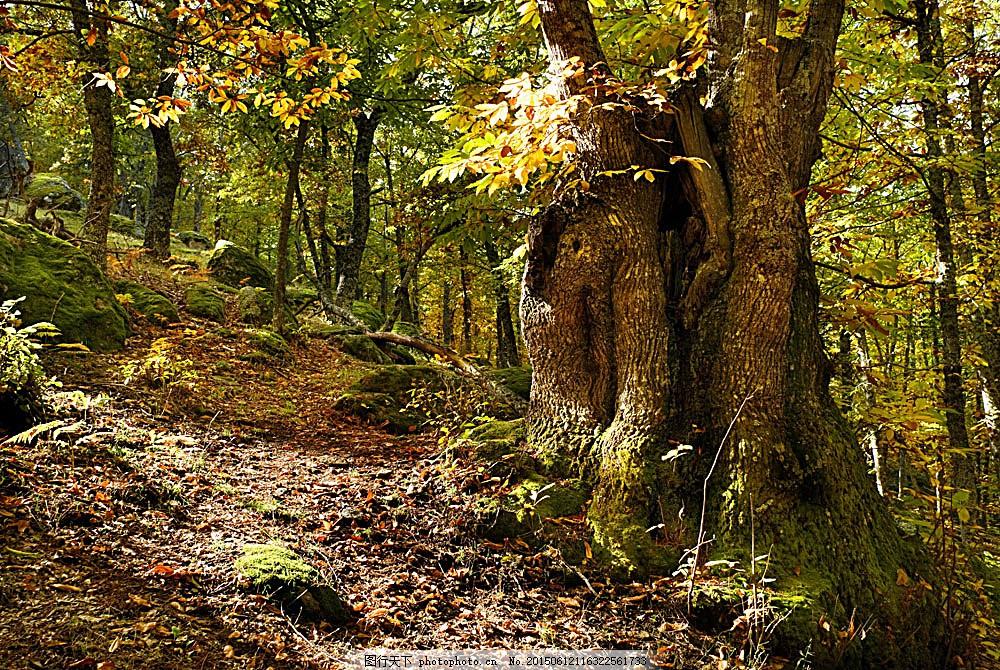 樹林景色攝影 熱帶雨林 森林風景 樹林風景 樹木風景 美麗景色