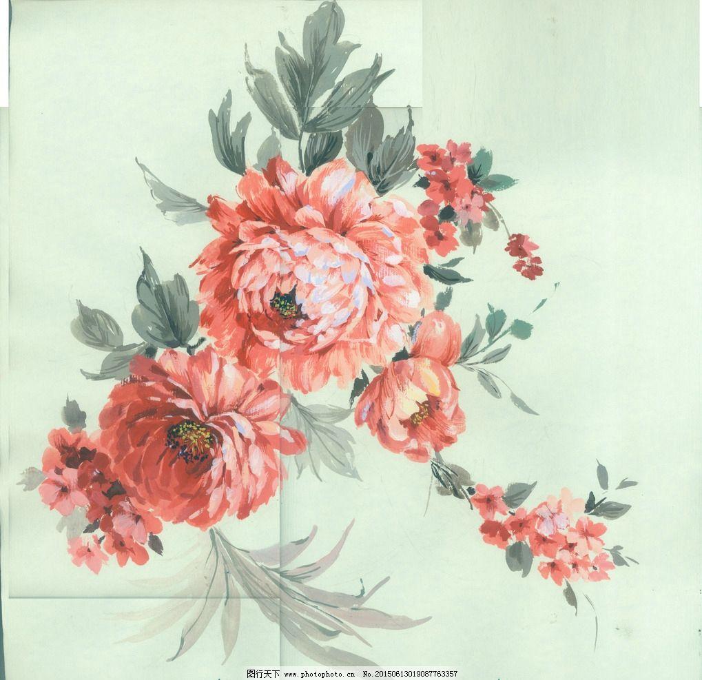 八仙花 手绘