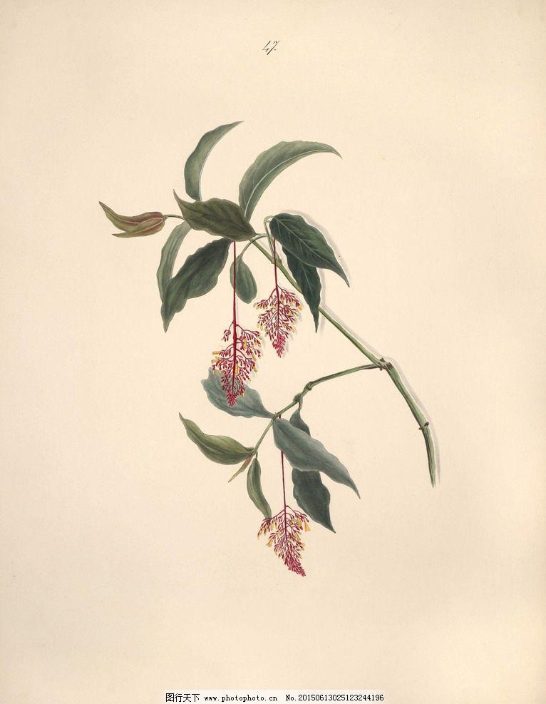 巴西花朵 植物 花园花卉大全 手绘花卉 蝴蝶 装饰画素材 无框画