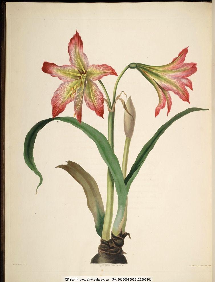 兰花 手绘花卉 植物图谱 花卉 蝴蝶 装饰画素材 无框画 绘画 插画