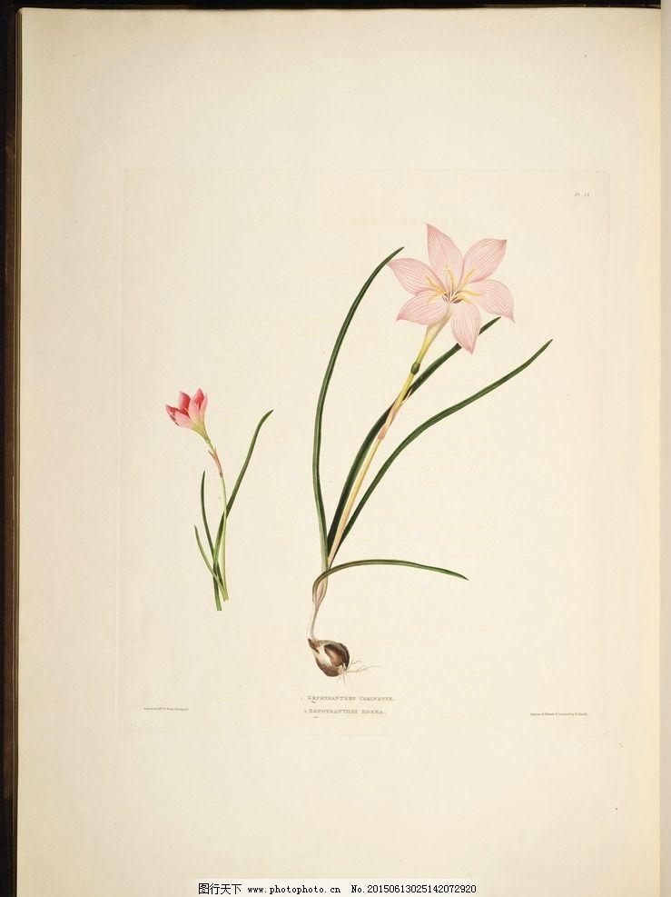 植物图谱 花卉 蝴蝶 装饰画素材 无框画 绘画 插画 图书扫描影印 手绘