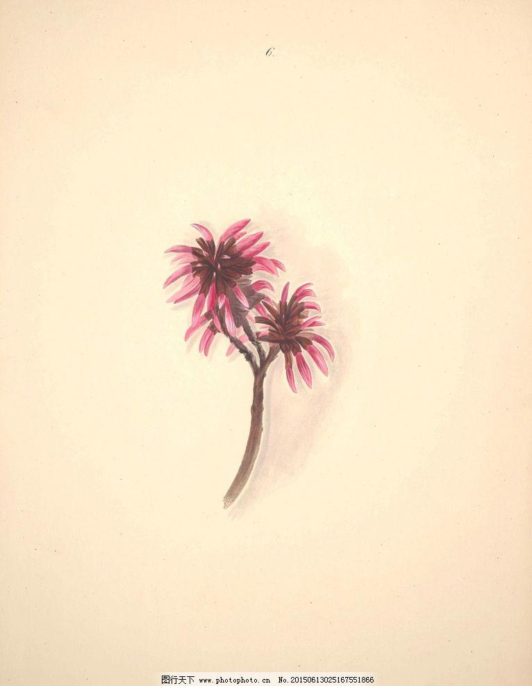 巴西花朵 植物 花园花卉大全图片,手绘花卉 蝴蝶 装饰