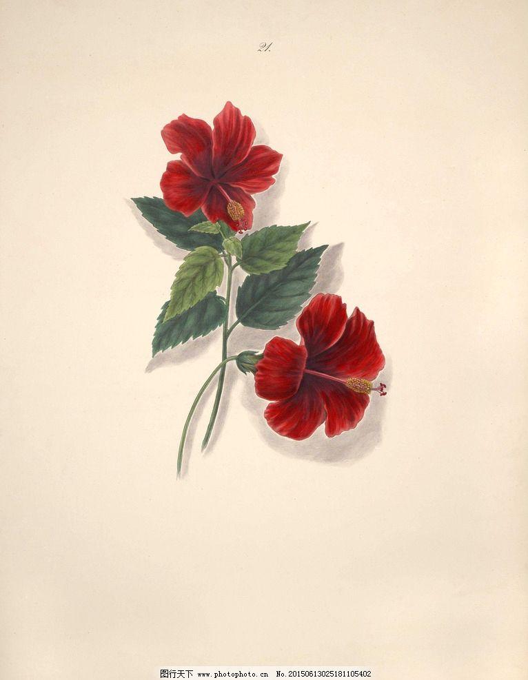 巴西花朵 植物 花园花卉大全 手绘花卉 蝴蝶 装饰画素材 无框画 绘画