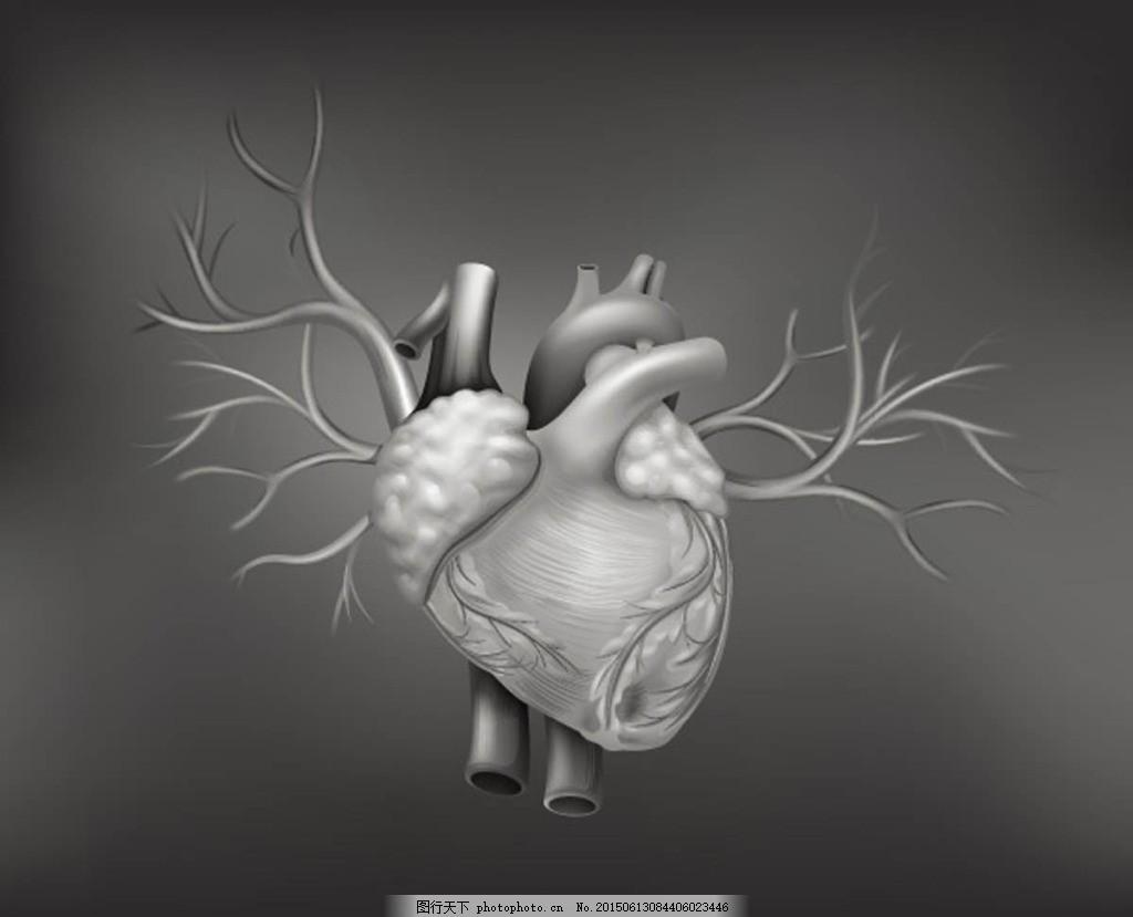 人体心脏器官设计矢量 人体心脏器官设计矢量素材 人体器官 结构图