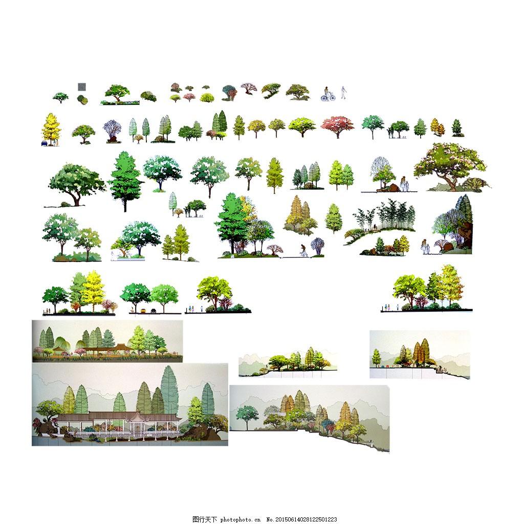 手绘彩色立面 花草素材 园林素材 园林配景 园林花草 白色