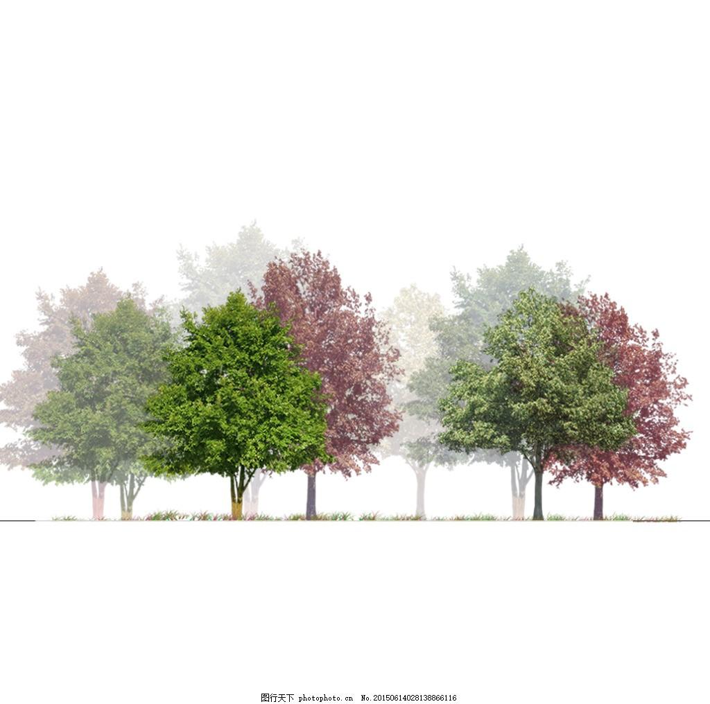 植物立面剖面手绘素材4 花草素材 园林素材 园林配景 园林花草