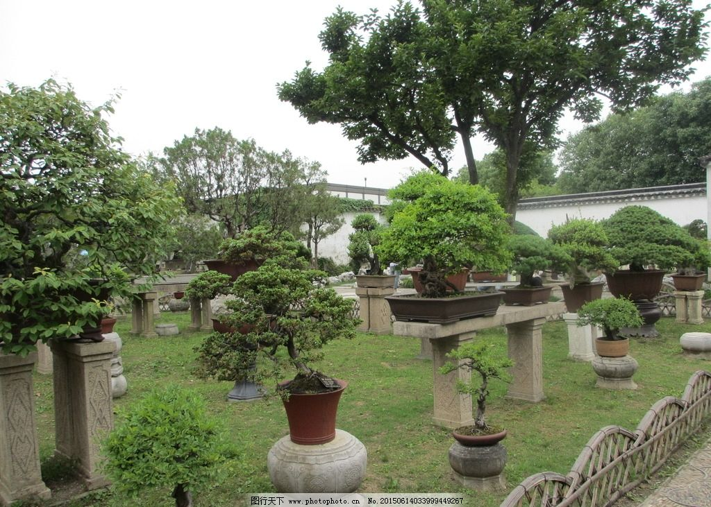 苏州拙政园 苏州园林 古代园林 盆景 假山 摄影 国内旅游