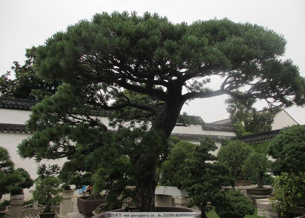 苏州拙政园 苏州园林 园林 古代园林 5a景区 盆景 假山 摄影 生物世界