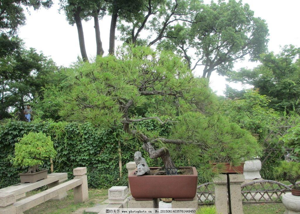 苏州拙政园 苏州园林 园林 古代园林 5a景区 盆景 假山  摄影 生物