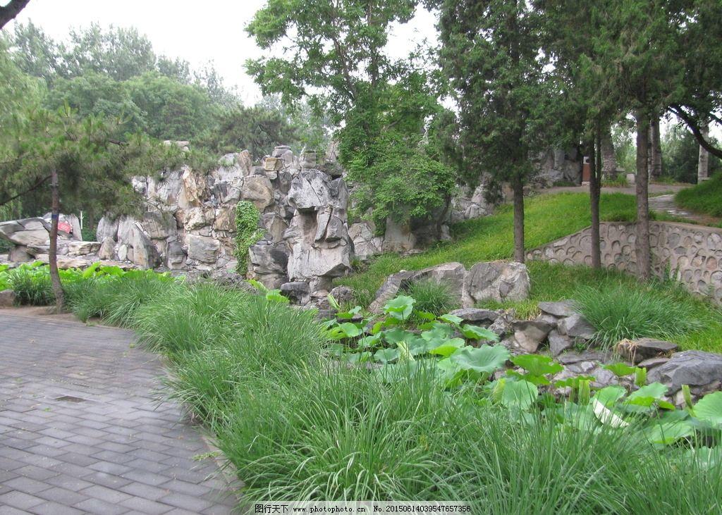 假山 荷叶 松树 园林建筑 小路 花草 绿化景观 树木 园林风景 摄影
