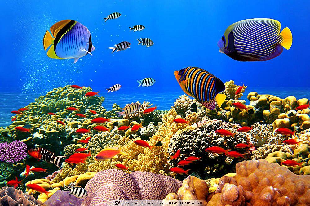 美丽珊瑚和鱼儿 鱼群 鱼类动物 海鱼 海底世界 海洋生物 水中生物