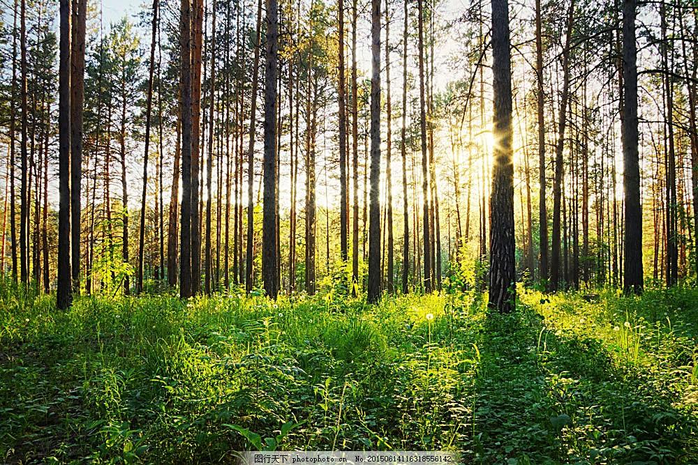 森林风景 森林风景摄影图片素材下载 美丽树林风景 阳光 美丽大自然