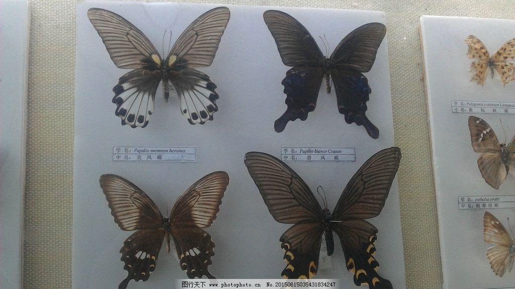 蝴蝶 造型 图案 摄影 艺术 美丽 自然 昆虫 素材 优雅 摄影 生物世界图片