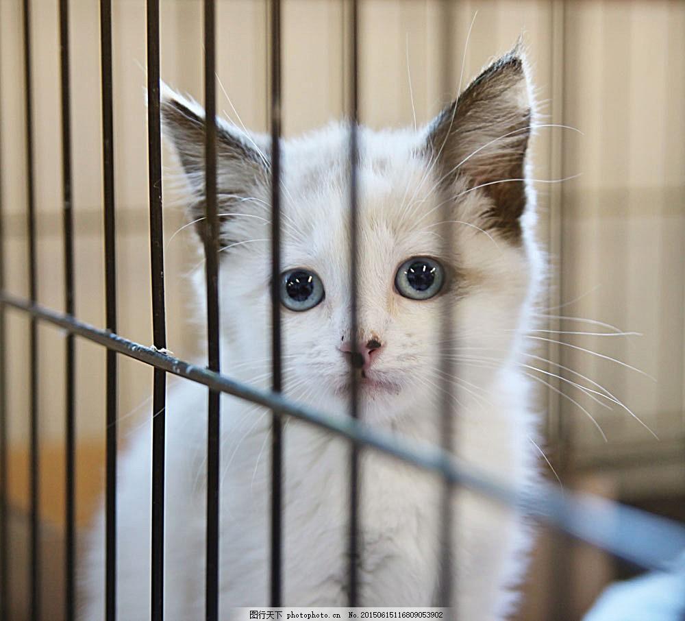 里的小猫图片素材 笼子里的小猫图片 猫咪 小猫 宠物 猫科动物 野生
