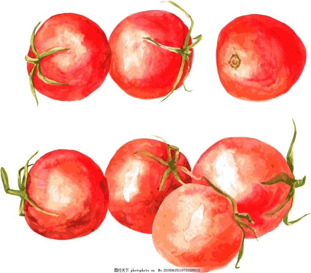 手绘西红柿