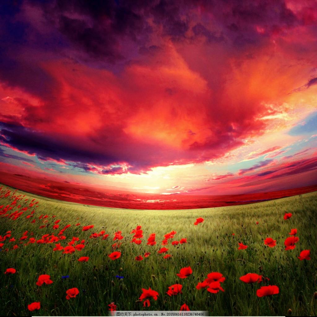 红色天空背景 花海 红色天空背景合成 夕阳背景