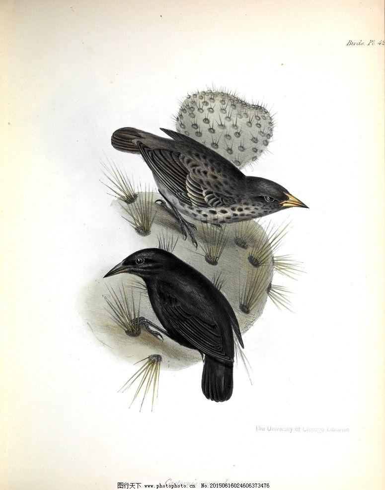 小鸟图书手绘插画图片