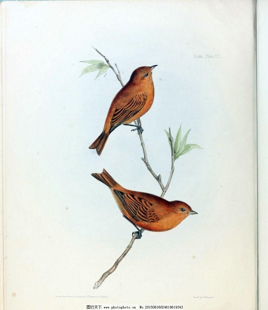 小鸟手绘插画图片