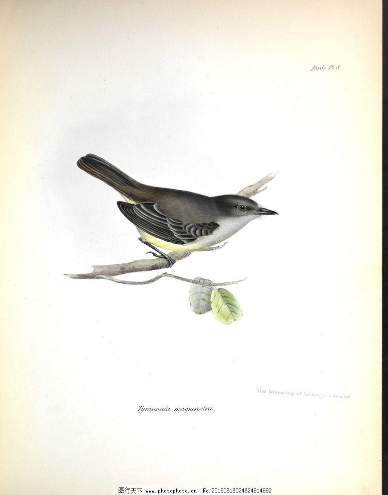 手绘小鸟 高清鸟类插画图片,手绘鸟类 鸟类太阳鸟 -图