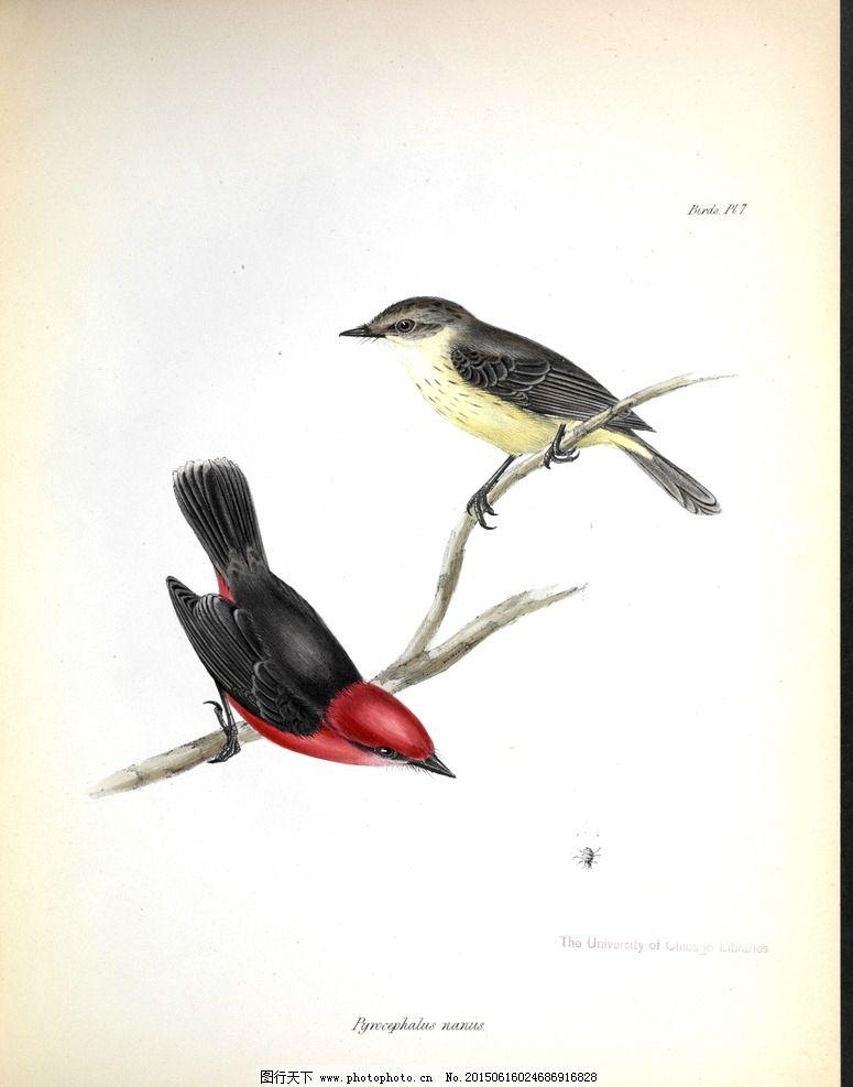 手绘小鸟 高清鸟类插画图片