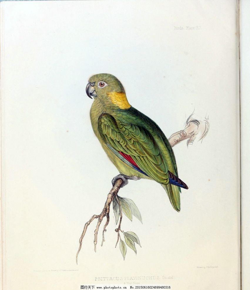 手绘小鸟插画图片