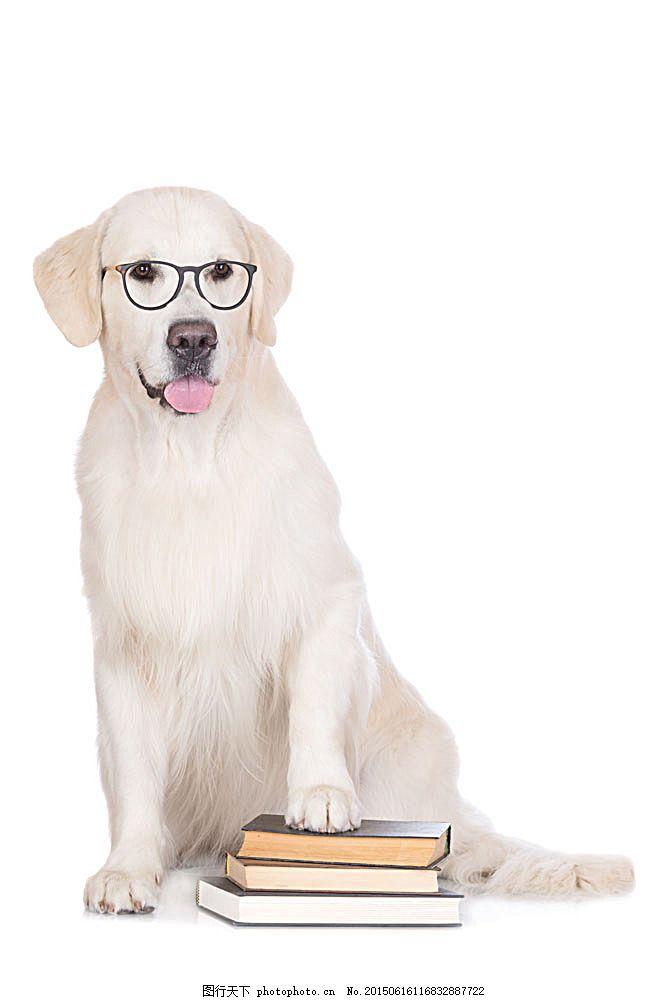 书本与戴眼镜的小狗 戴眼镜的狗 狗狗 宠物狗 动物摄影 动物世界