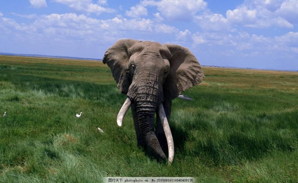 大象 动物 生物 生物世界 野生动物 摄影 黑色
