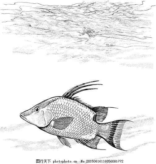 鱼 水中动物 动物素描