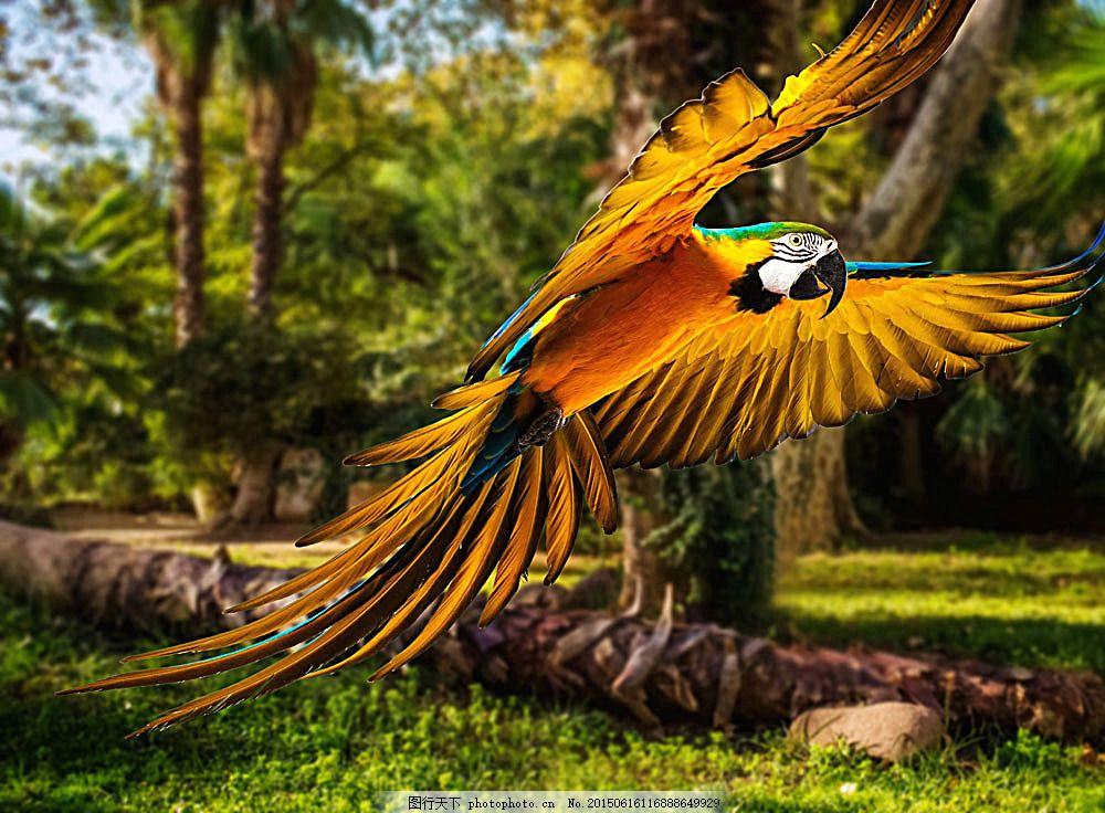 树林里飞翔的鹦鹉 飞鸟 鸟类动物 动物摄影 飞禽 空中飞鸟 生物世界