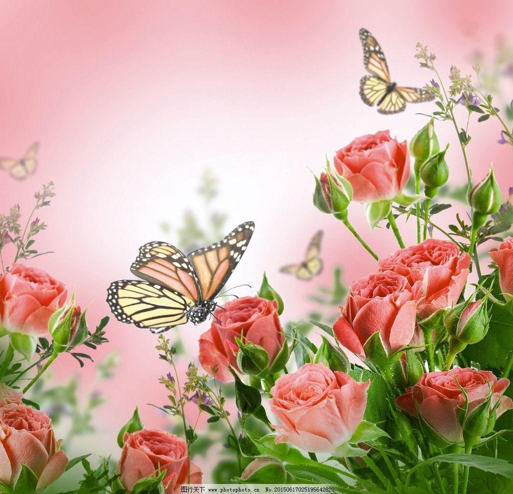 桃花蝴蝶手绘图