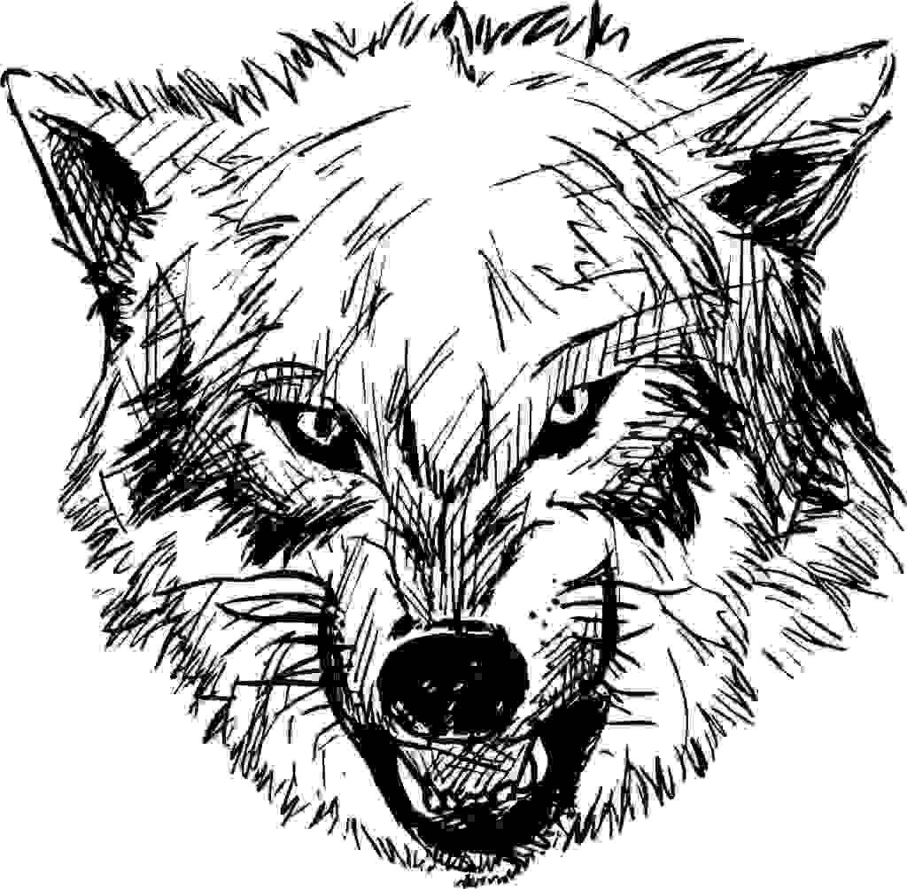 狼怎么画铅笔画