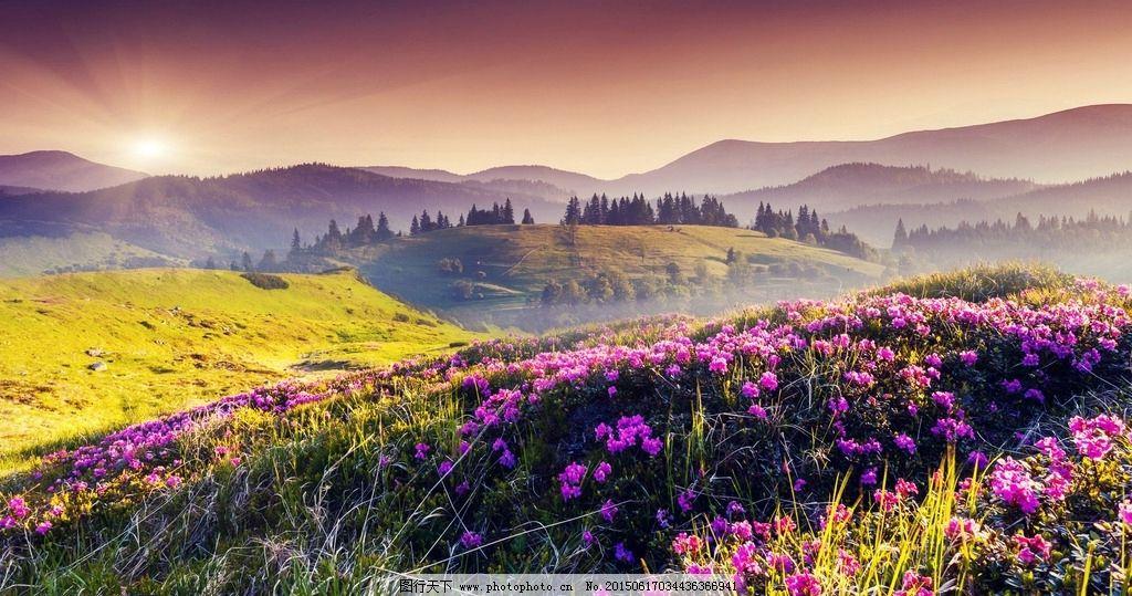 山坡 野花 风景 壁纸 高清 摄影 自然景观 山水风景 96dpi jpg