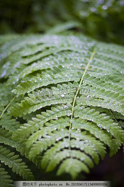 蕨类植物 制动 绿色 森林 叶 自然 湿 雨滴 水 黑色