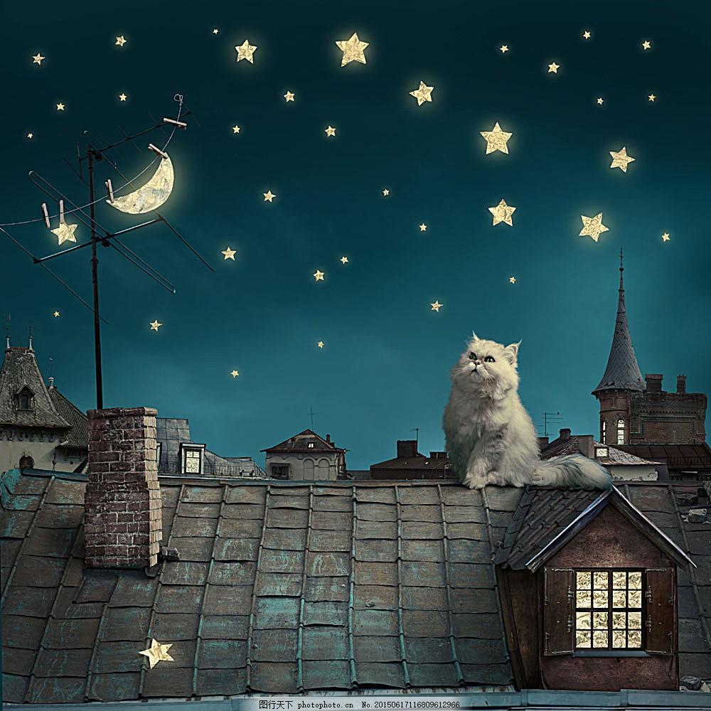 屋顶上的小猫 猫咪 宠物猫 可爱动物 动物世界 陆地动物 生物世界