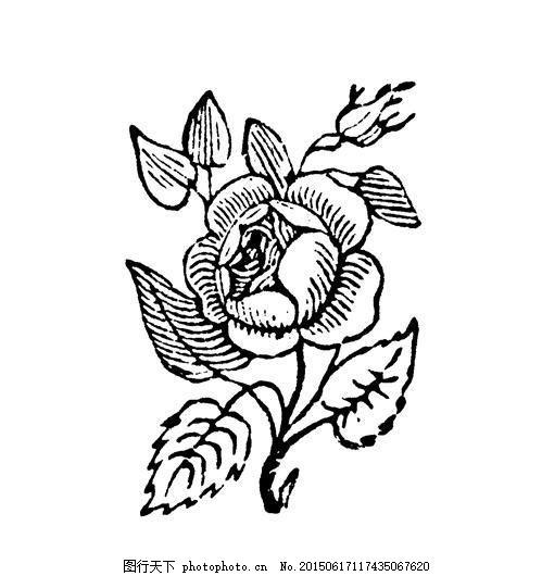 花草图案 现代花纹 设计素材 现代图案 装饰图案 书画美术     白色