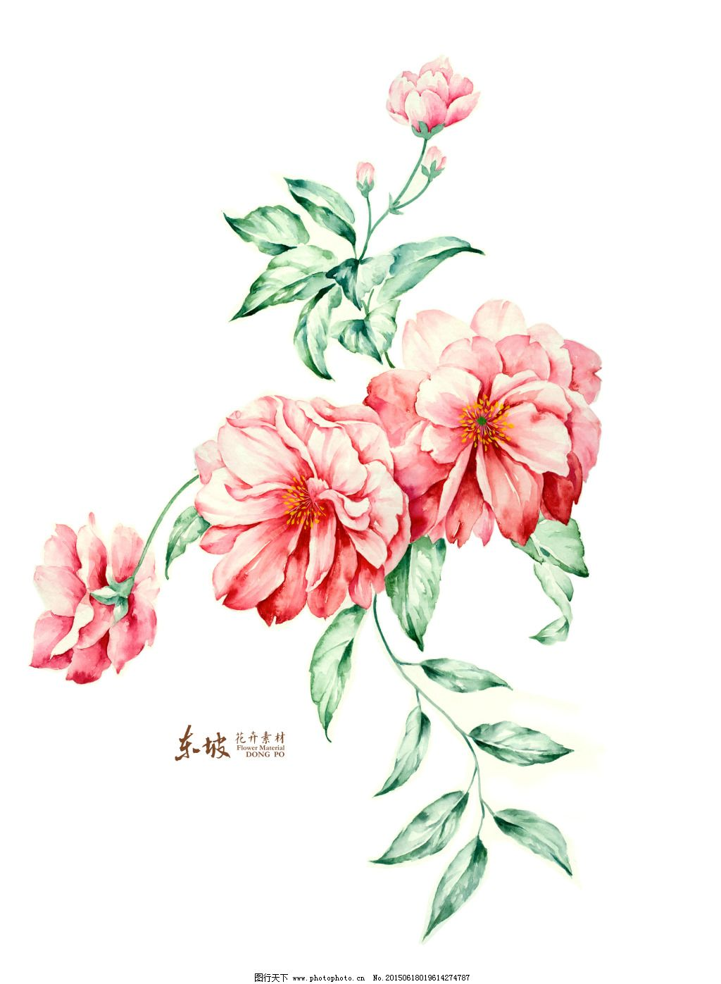 手绘花卉组合免费下载 花苞 叶子纹理 红花手绘花 叶子纹理 花苞 图片