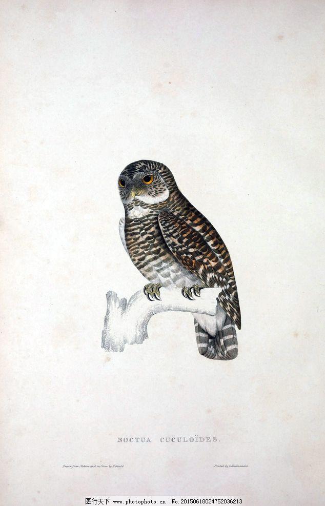 彩色小鸟插画 高清鸟类手绘图片