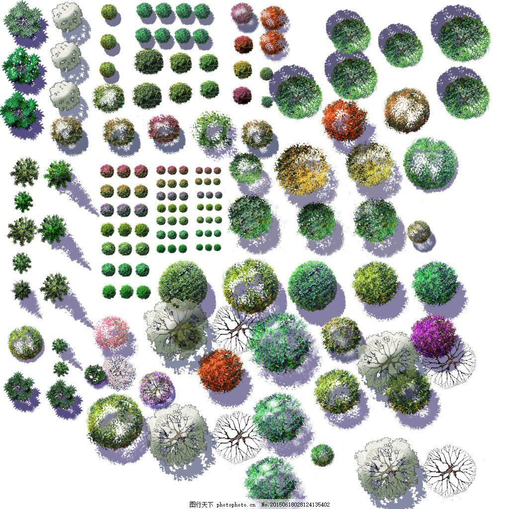平面植物09 树木 园林素材 园林植物 植物素材 植物景观 手绘植物素材