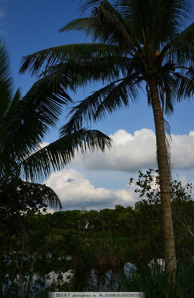椰子树 椰树 椰子 热带 植物 树 海南风光 蓝天白云 摄影 自然景观 自