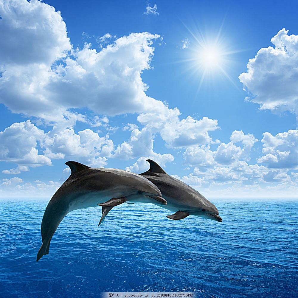 海豚简笔画 风景