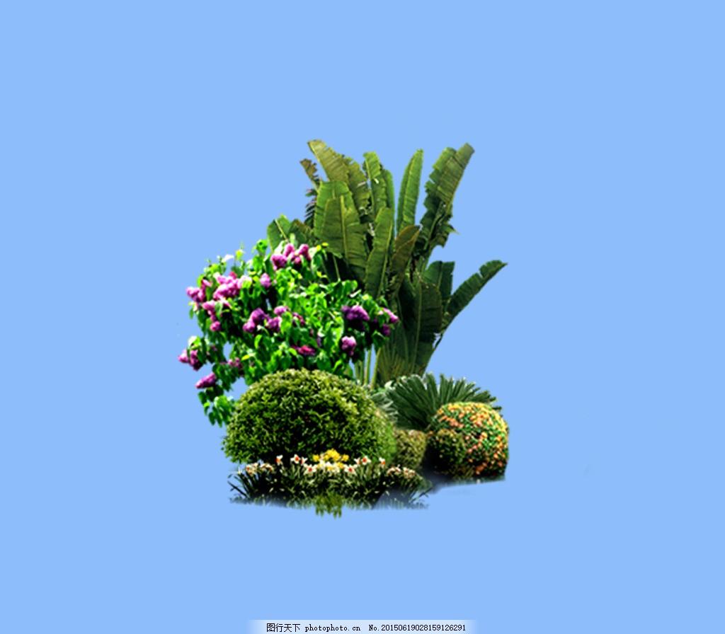 园林植物草坪 植物素材 园林素材 蓝色